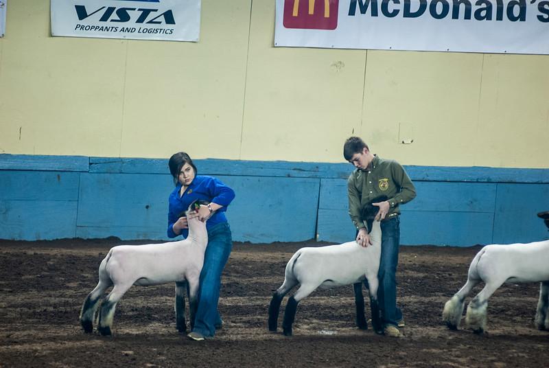20190321_GRAND-DRIVE-SHEEP-006