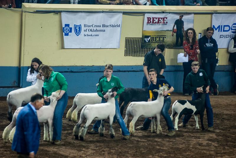 20190321_GRAND-DRIVE-SHEEP-022