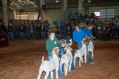 20190321_GOATS_WETHERS_DAY2-15