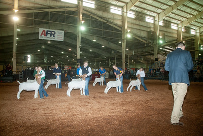 20190321_GOATS_WETHERS_DAY2-11