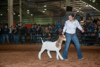 20190321_GOATS_WETHERS_DAY2-5
