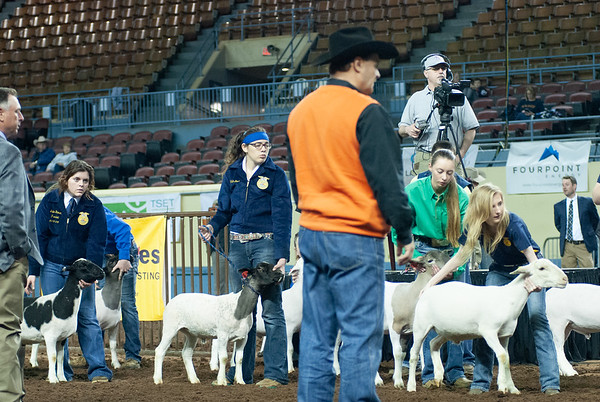 20190320_LAMBS_WETHERS_DAY1-12