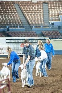 20190320_LAMBS_WETHERS_DAY1-6