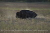 Wichita Mountains Wildlife Refuge, Lawton, Oklahoma