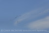 Sandhill cranes migrating, Wichita Mts OK (2)
