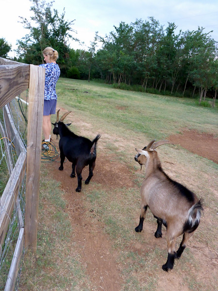 Arva and her goats.