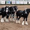 Guymon_rodeo16 5-1-10