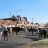 OKC_Stockyards_Parade17 12-4-10