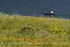 Jed Johnson Lake views, Wichita Mts OK (22)