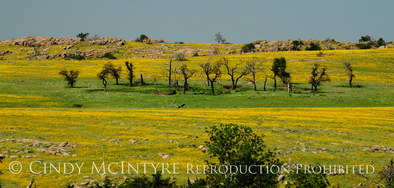 Fields of gold from Burford Lake Overlook, Wichita Mts (7)