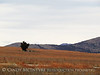 Wichita Mts NWR winter, OK (5)