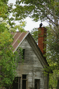 Vulture on a brick chimney at an abandoned house near Kaw Lake