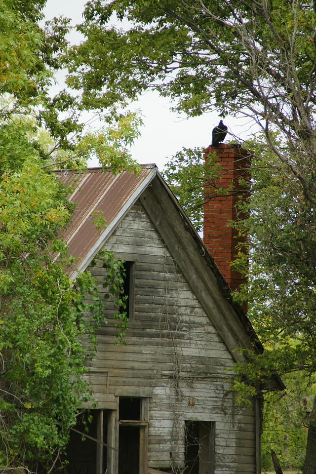 Vulture on a brick chimney at an abandoned house near Kaw Lake