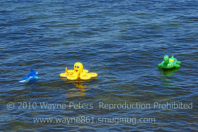 Sea creatures have been spotted in Lake Ontario, in front of the boardwalk!