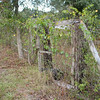 Old Fence and Gate_SS65668
