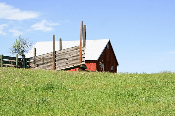 Red barn and cow pens SS85445