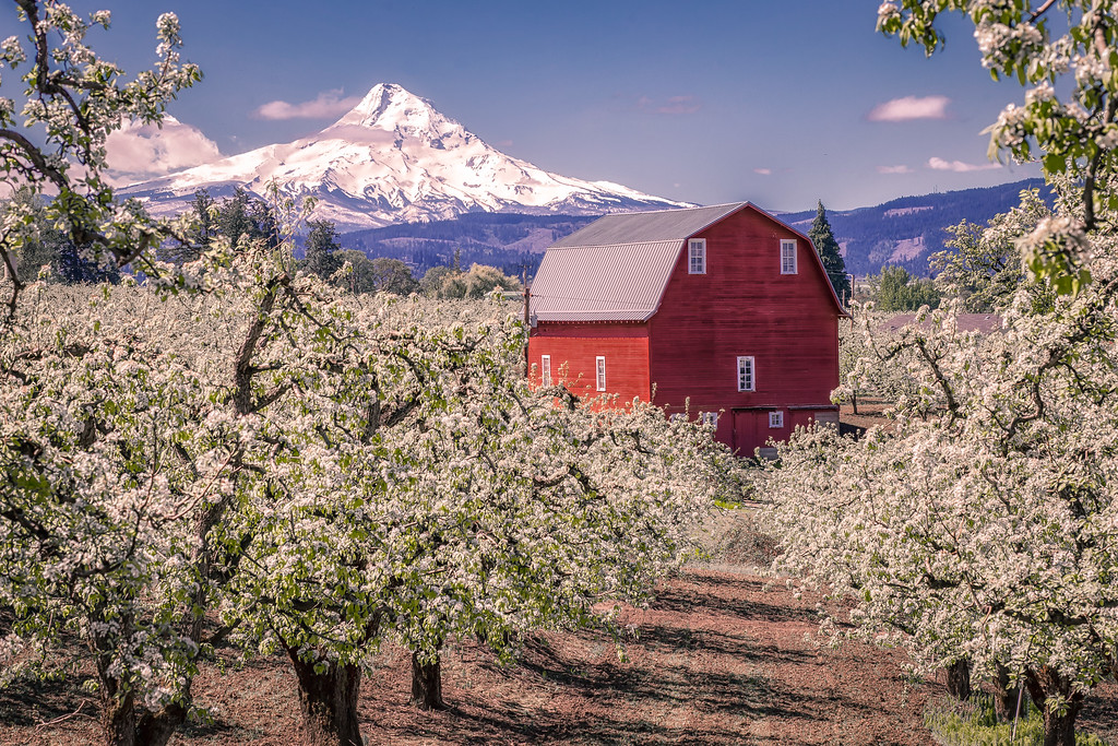 Springtime in Hood River, Oregon