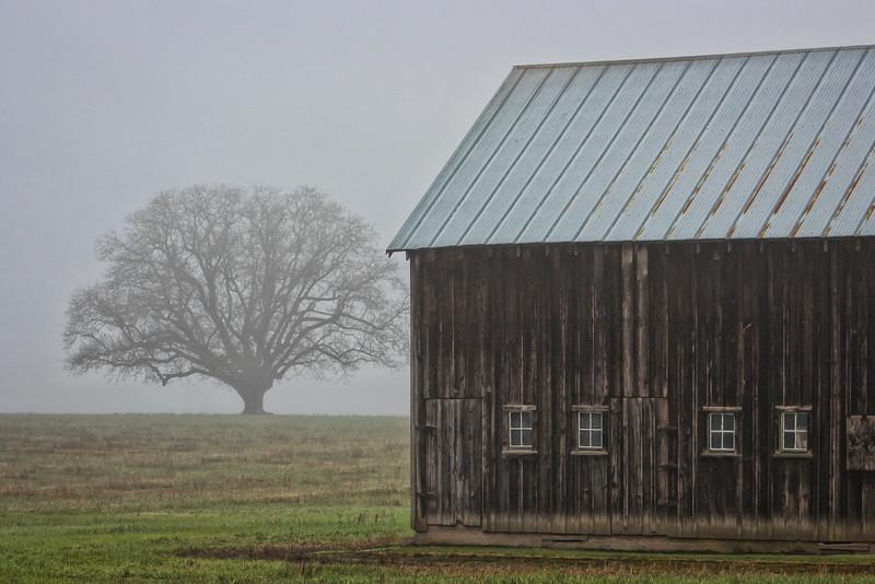Foggy barnscape