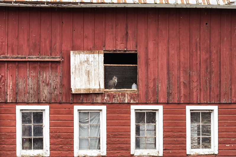 Cat in the barn window