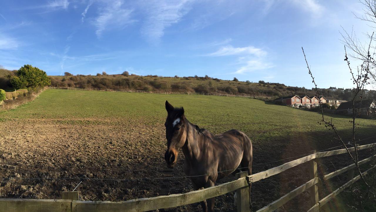 Coomber Meadow, Saltdean - 03