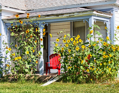 Sunflower Porch