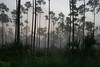 Early Morning in the Everglades, Florida