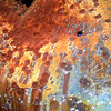 Car, Piermont, Schell Creek Range, Nevada