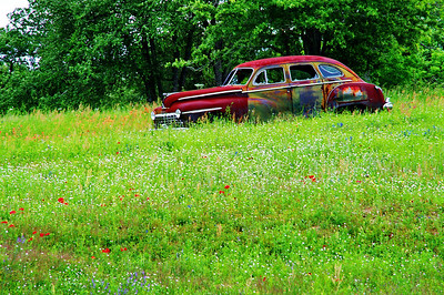 Old Buick in a field of wildflowers near Gonzales exit on I-10