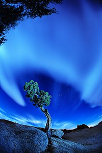 0945_Joshua Tree-glow112415_224452_5DMIIIT
