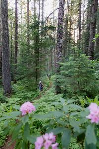 Old Cascadia