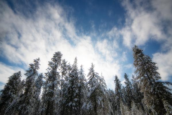 Nov 20 - Fresh Snow of the Evergreens<br /> <br /> Taken near West Yellowstone, Montana