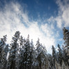 Nov 20 - Fresh Snow of the Evergreens<br /> <br /> Taken near West Yellowstone, Montana