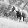 """May 31 - """"Storm""""<br /> <br /> This is my husband's horse, Storm.  He is a great trail horse!"""