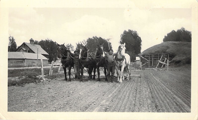 "Sam ""Fred"" Beattie (R) and another man with Emil's horses"