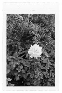 Claude Carmichael's Garden, Mpls