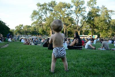 Zebra in the park
