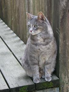 02-B42C11 [e] The Cat by Marlene Schwilk