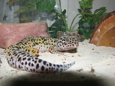 02-B42C24 [e] Logan's Gecko by Marlene Schwilk