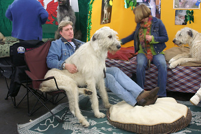 11-Lap_dog_at_Dog_show_SF_08_by_JeanRicket