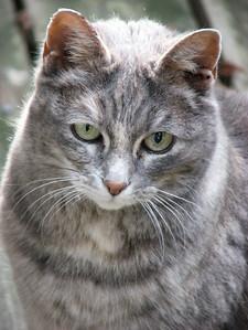 02-B42C13 [e] The Cat by Marlene Schwilk