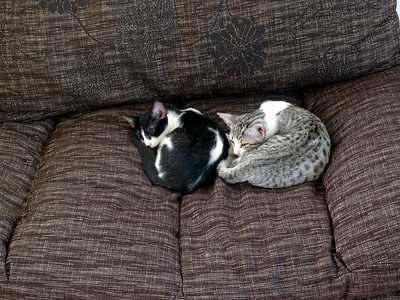 11-Friends_tired_out_P1030680_by_JeanRicket