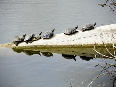 16-Box_Turtles_by_Reg_Ricket