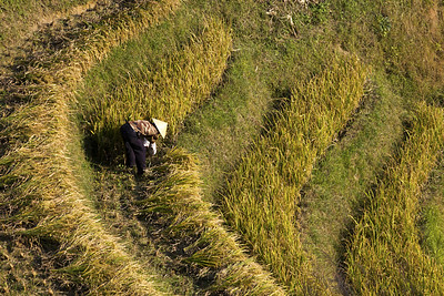 11-Longji_Rice_Terraces_by_David