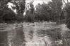 1979 canoe race 917