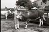 1979 4H 16 4H livestock 251
