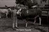 1979 4H 16 4H livestock 249