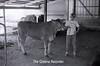 1979 4H 16 4H livestock 255