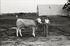 1979 4H 16 4H livestock 259