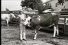 1979 4H 16 4H livestock 250