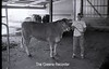 1979 4H 16 4H livestock 256
